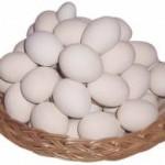 ovos_branco